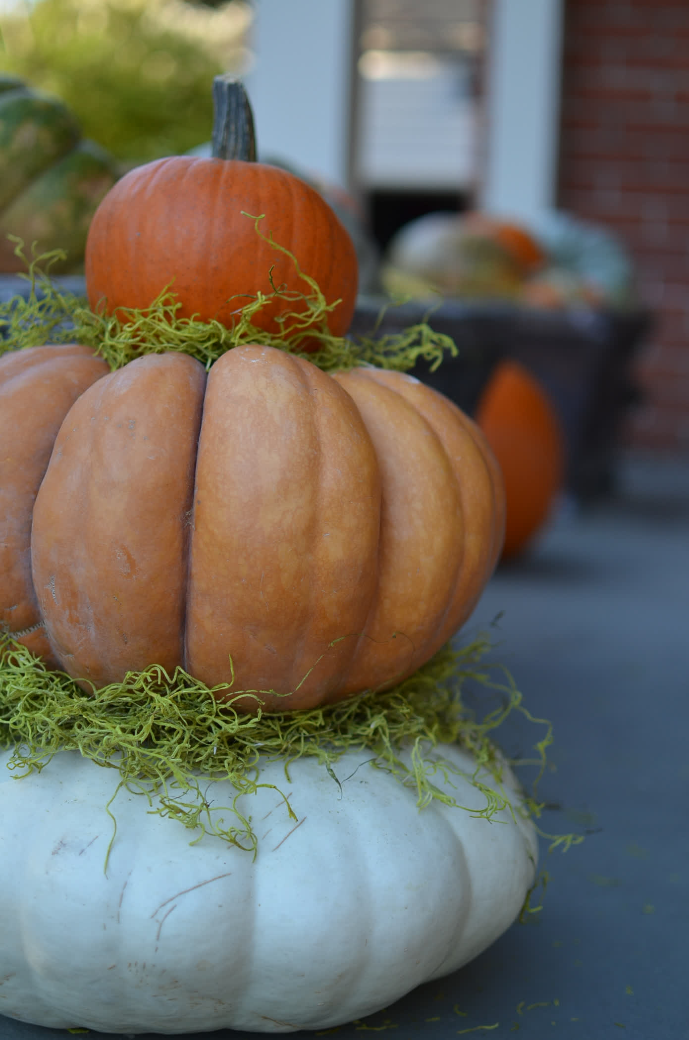 Don't cut your pumpkin; Display it as-is.