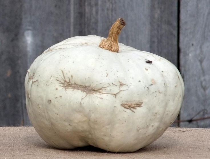 Blanc de Mayet