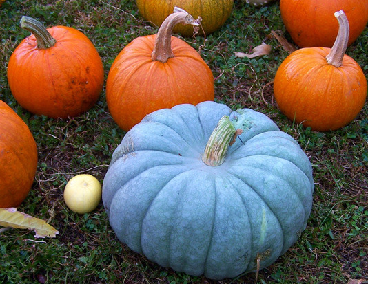 Heirloom pumpkins and squash