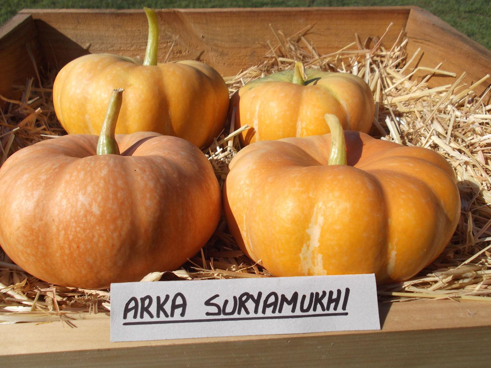 Arka Suryamukhi