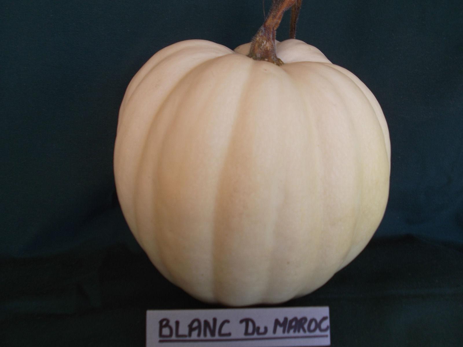 Blanc Du Maroc