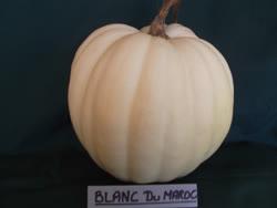 maroc_blanc -  Morocco