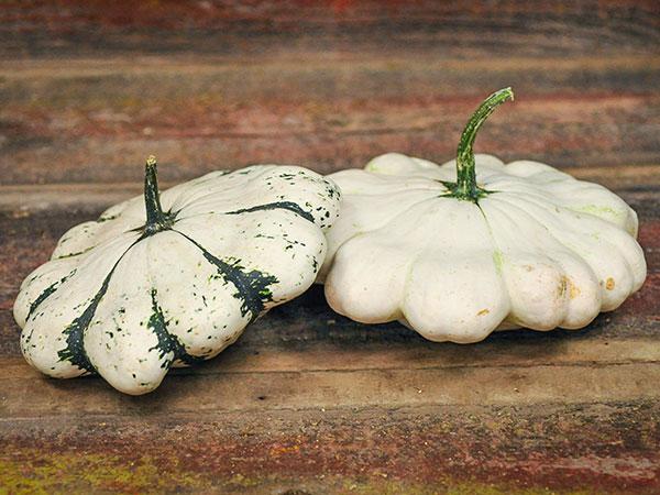 Patisson Panache Blanc Et Vert Scallop