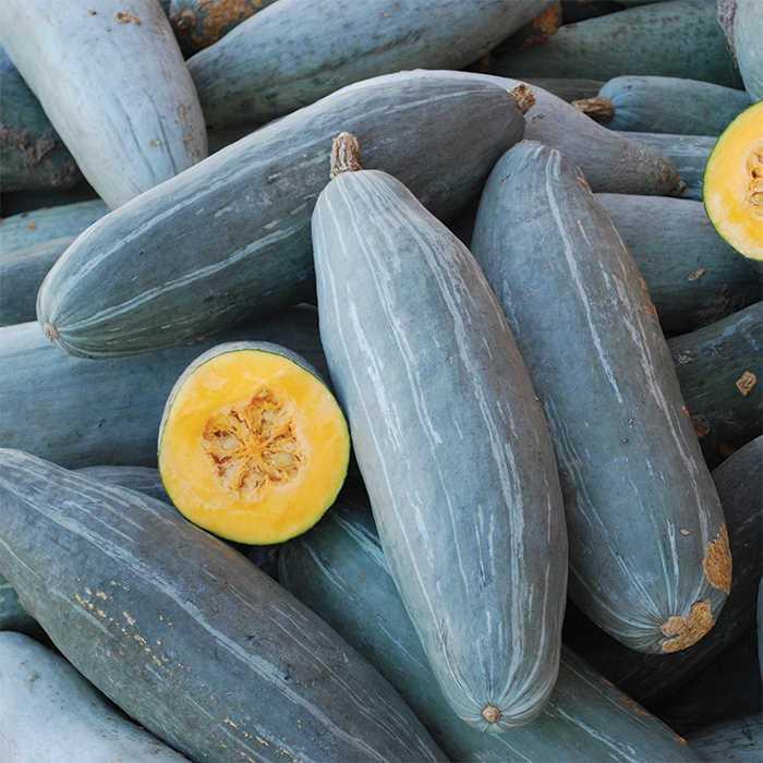 Guatemalan Blue Banana Squash