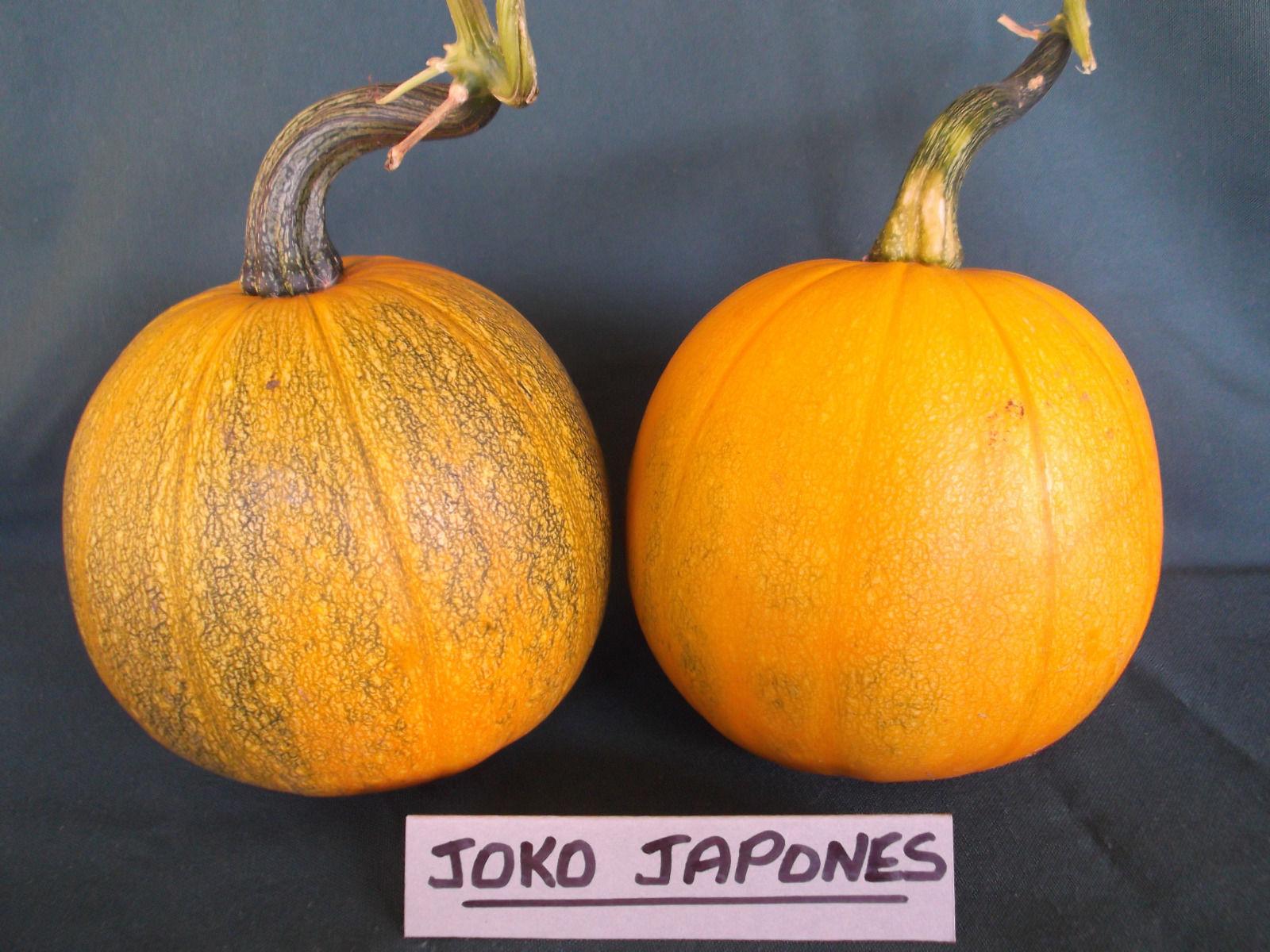 Joko Japnones