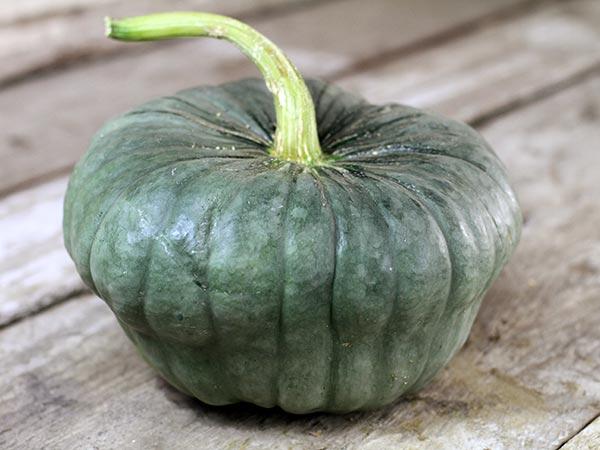 New Zealand Blue Pumpkin