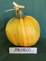 pacheco -  Mexico