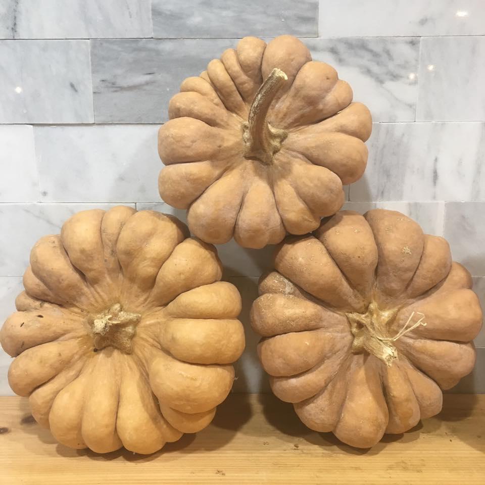Yuxijiangbinggua Pumpkin