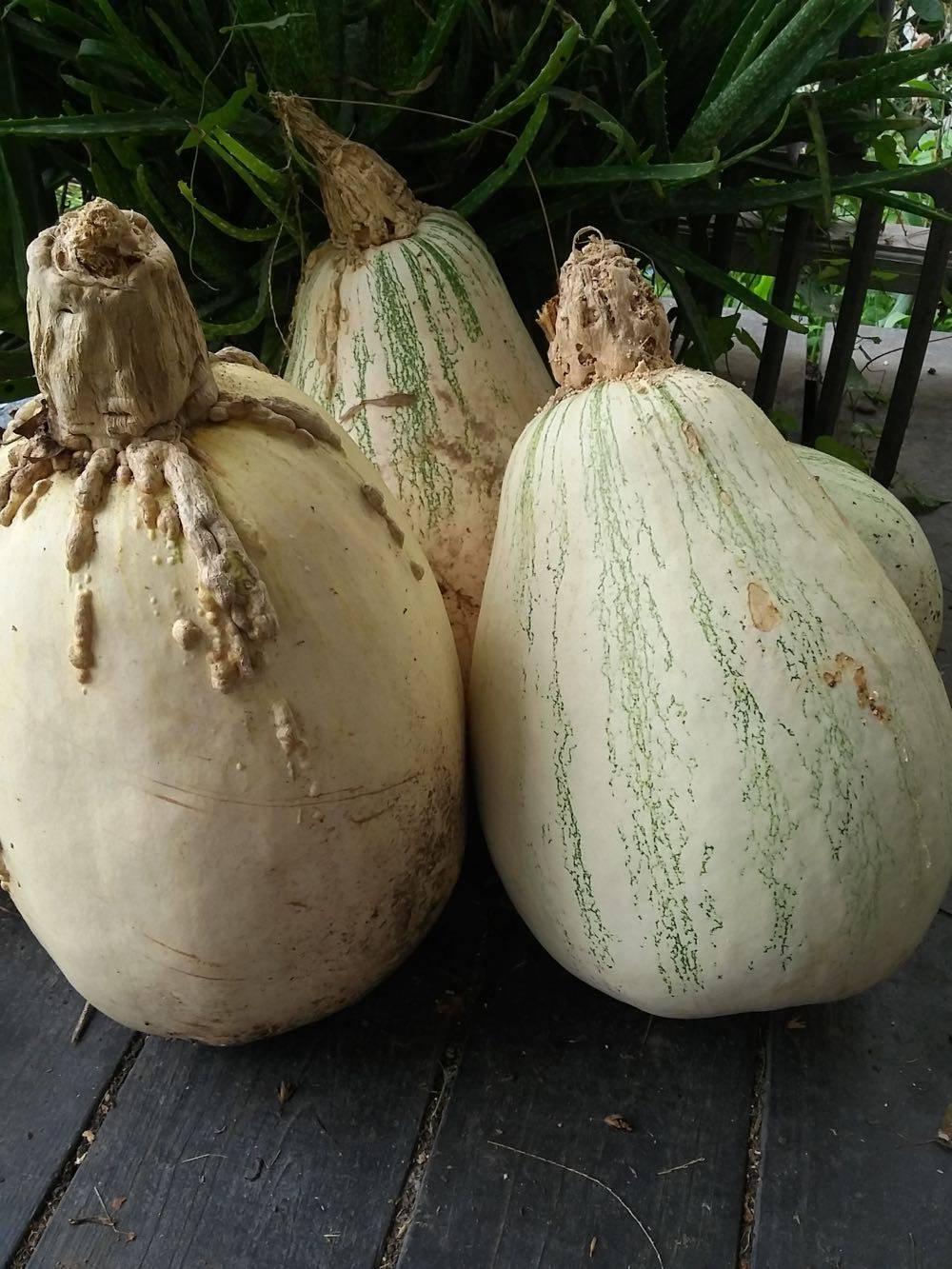 Tennessee Sweet Potato
