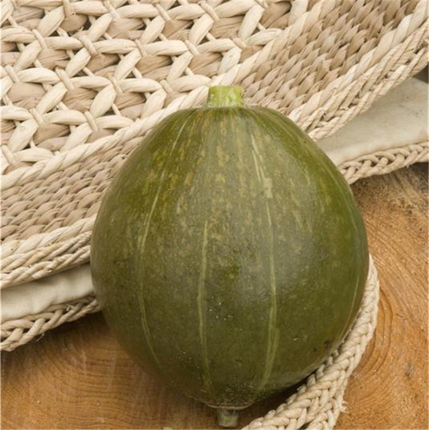 Olive Squash
