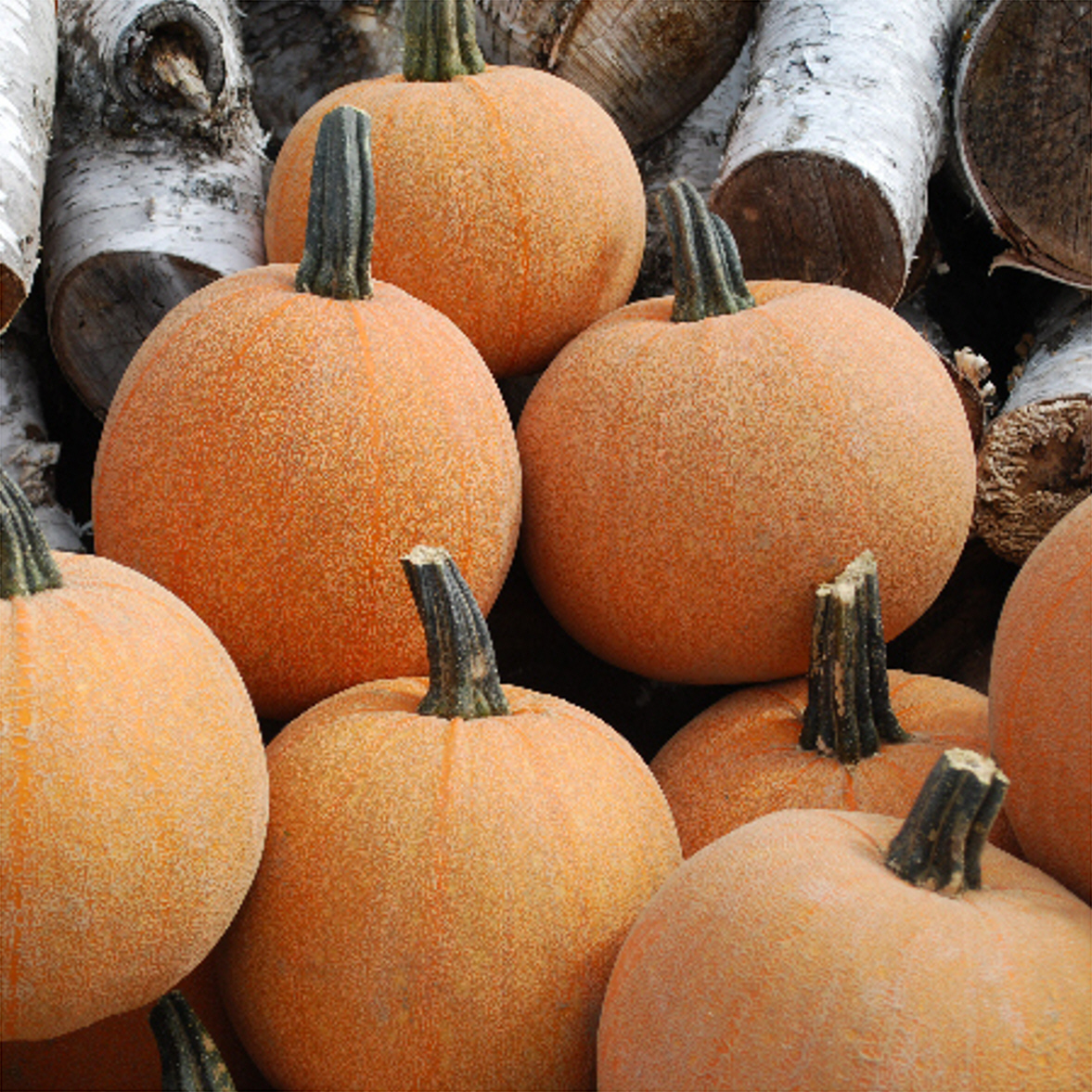 Winter Luxury Pumpkins