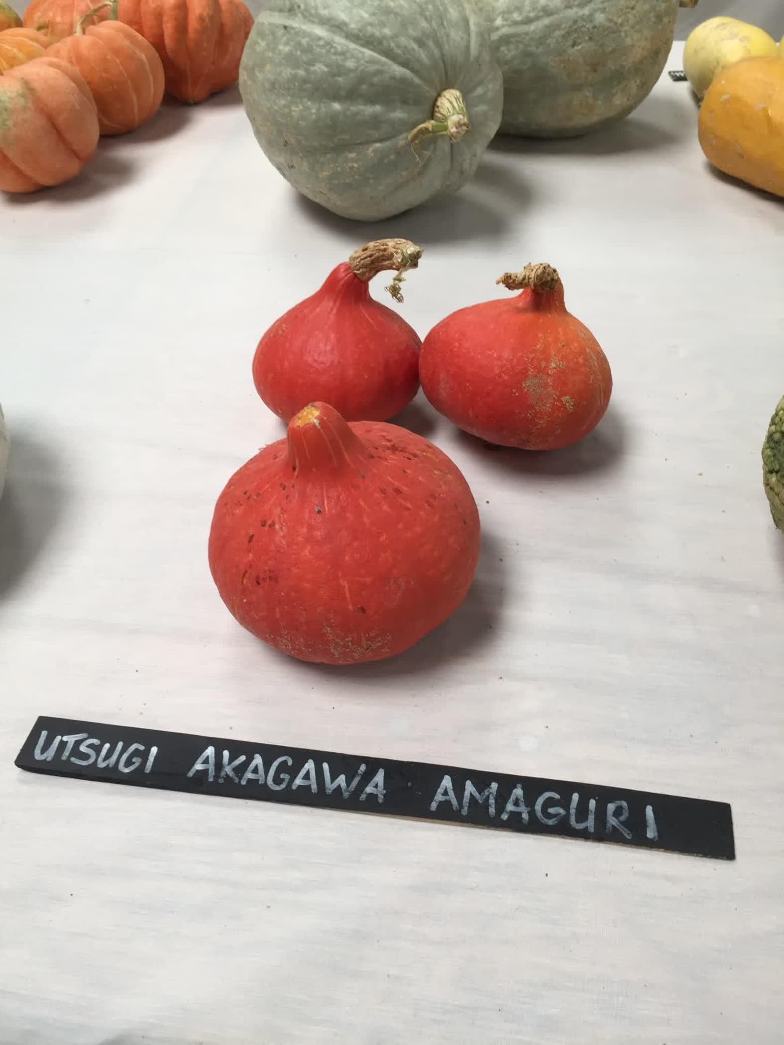 Utsugi Akagawa Amaguri
