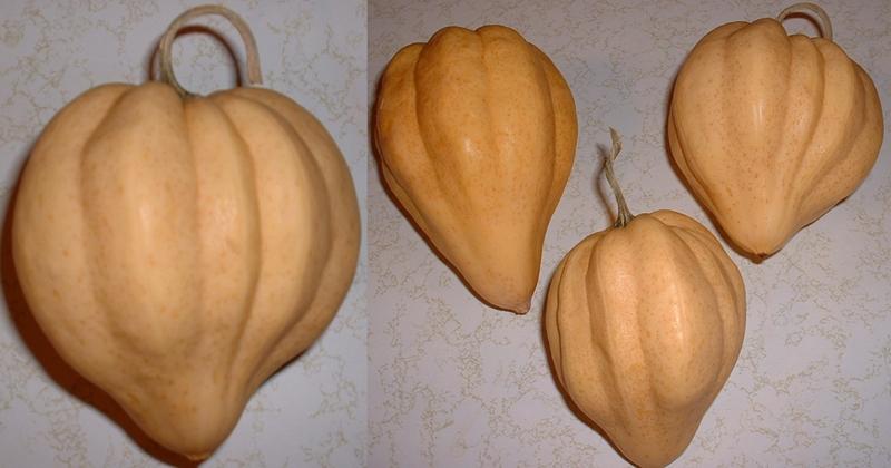 Thelma Sanders Sweet Potato