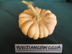 yuxijiangbinggua -  China