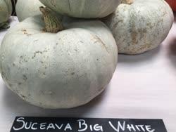 suceava_big_white -  Romania