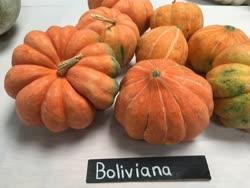 boliviana -  Bolivia