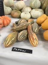 pawpaw -  Australia