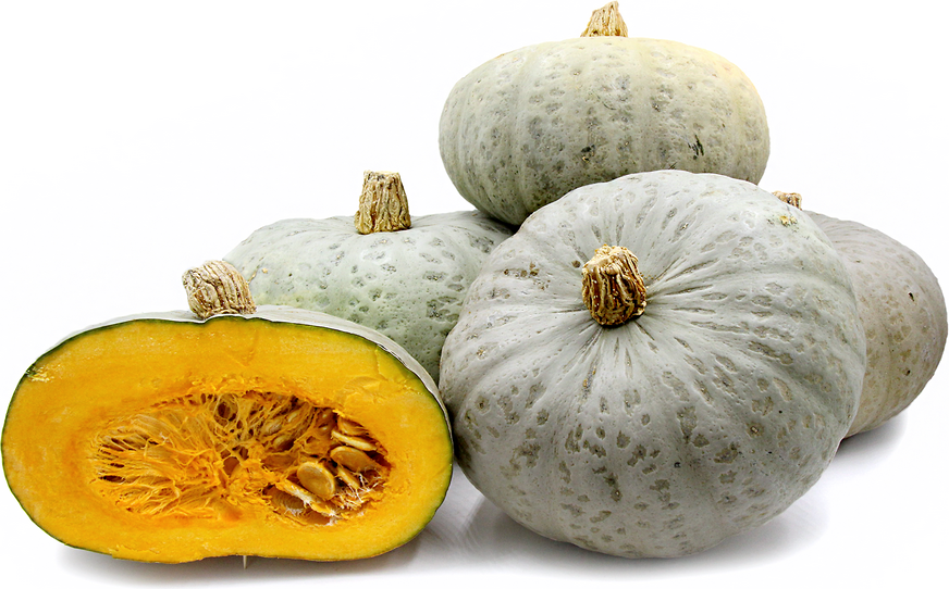 Confection Squash