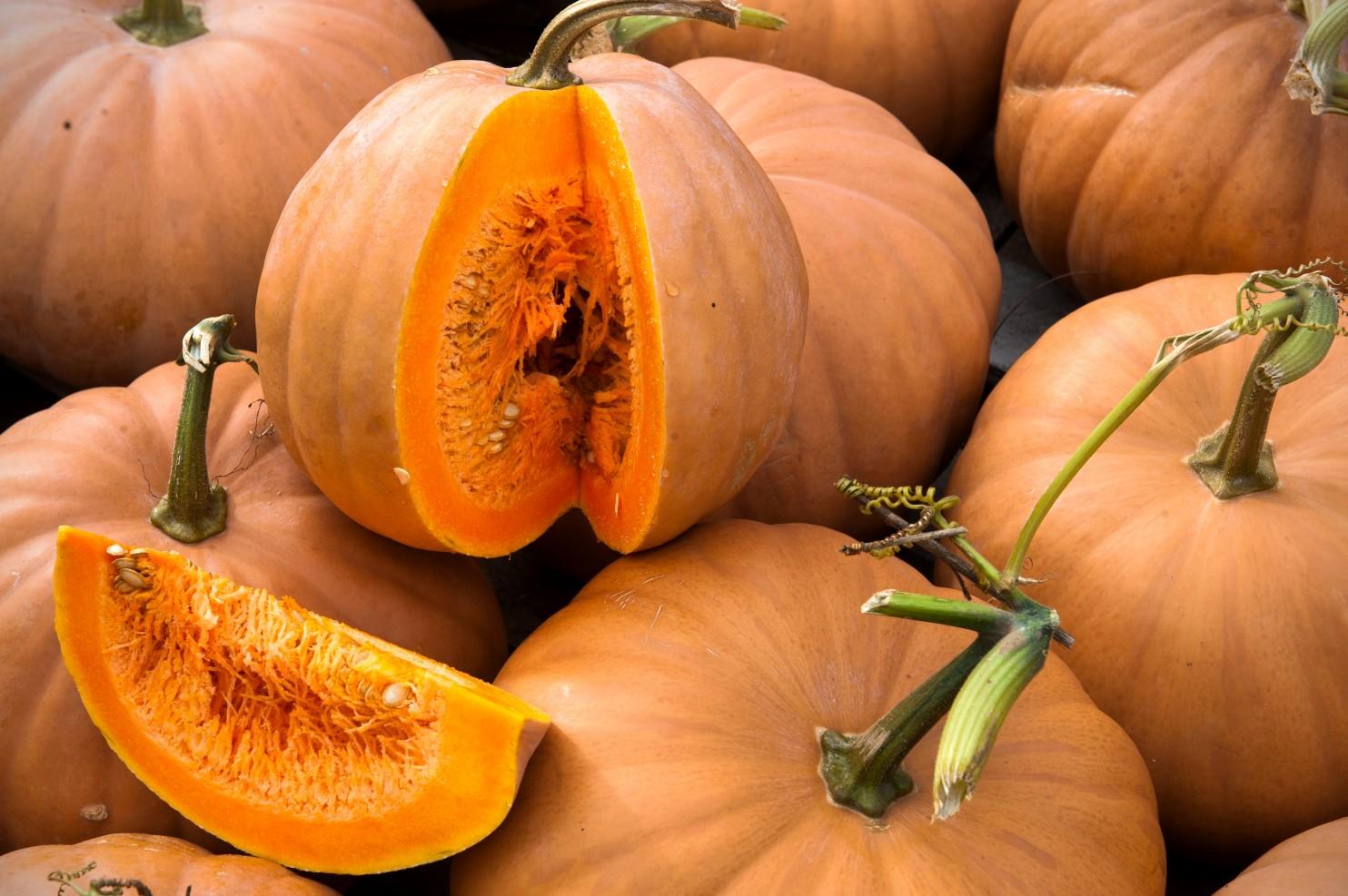 Cow Pumpkin