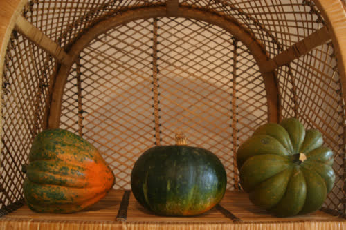 kabocha, sold as  buttercup and Ontario acorns