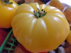 yellow_tomato_pink_inside -  medium sized, round