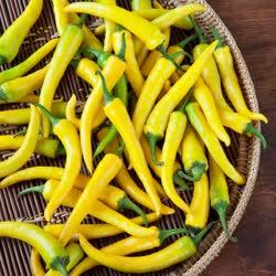 yellow_cayenne -  30,000 - 50,000 SHU