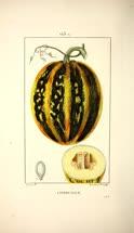 03-Panckoucke-1833t.jpg